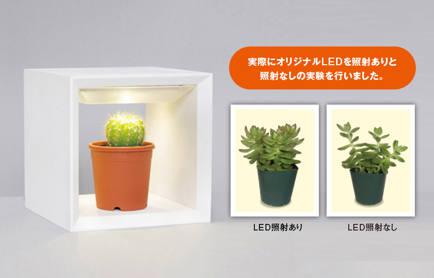 植物育成栽培実験