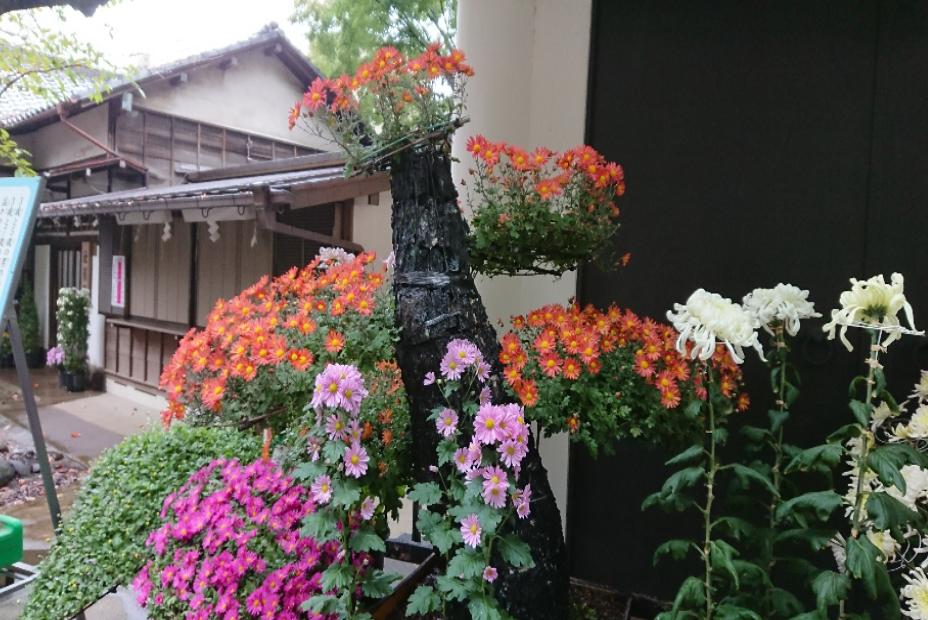 文京区 天租神社 創作園芸?盆栽?