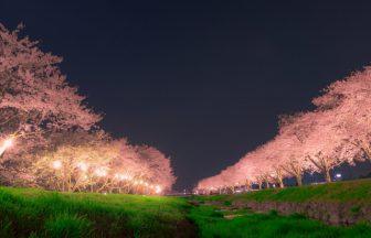 お花見と照明