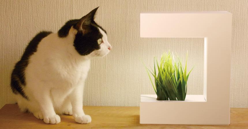 健康にやさしい野菜やペットが喜ぶ植物が簡単に育てられるAkarina14